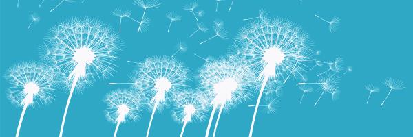 seeds, dandelions