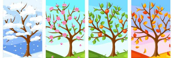 trees during different seasons